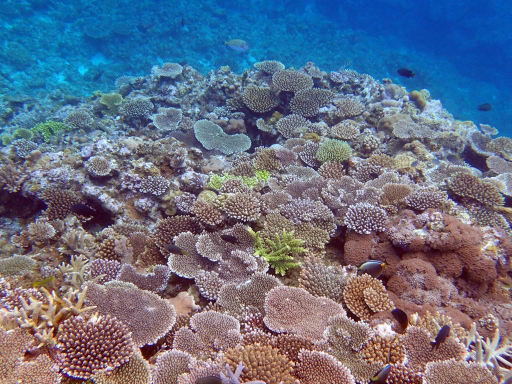 阿嘉島で体験ダイビング