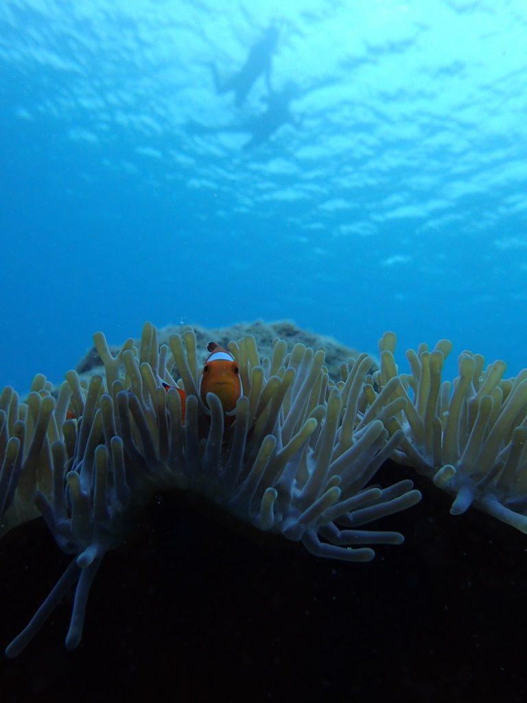 初めての沖縄の水中世界♪