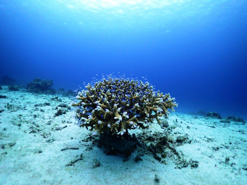 かわいい水中生物にたくさん出会えました☆