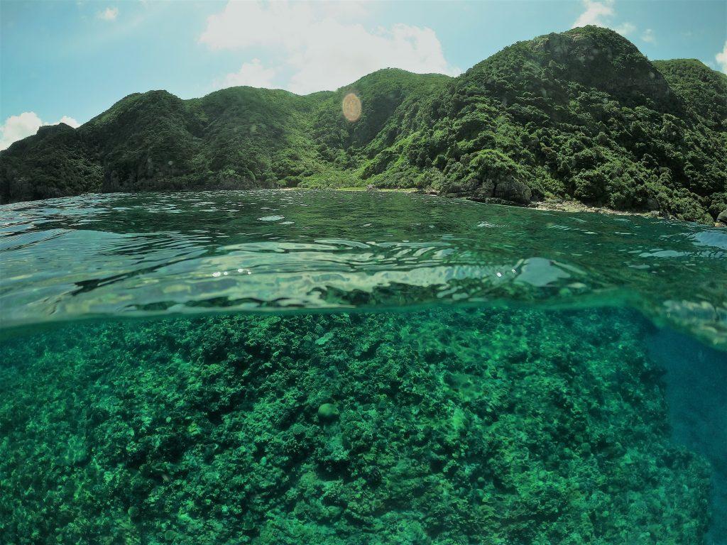 テングカワハギは海がきれいな印!